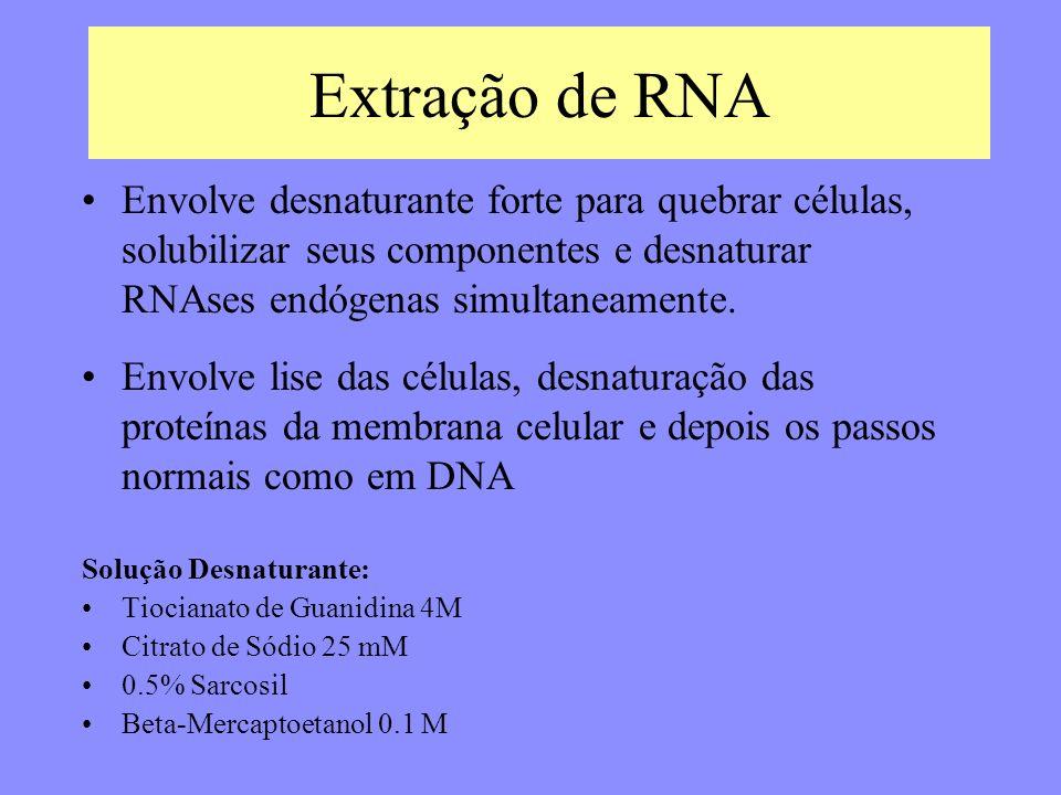 Extração de RNA Solução Desnaturante: Tiocianato de Guanidina 4M Citrato de Sódio 25 mM 0.5% Sarcosil Beta-Mercaptoetanol 0.1 M Envolve lise das células, desnaturação das proteínas da membrana celular e depois os passos normais como em DNA Envolve desnaturante forte para quebrar células, solubilizar seus componentes e desnaturar RNAses endógenas simultaneamente.