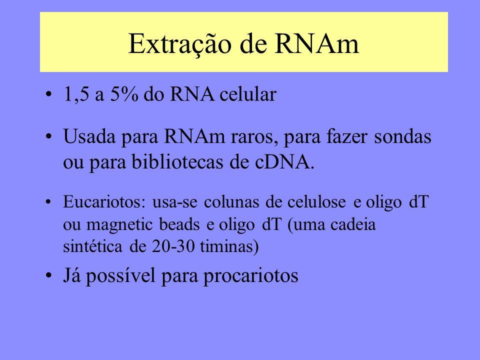 Extração de RNAm Usada para RNAm raros, para fazer sondas ou para bibliotecas de cDNA.