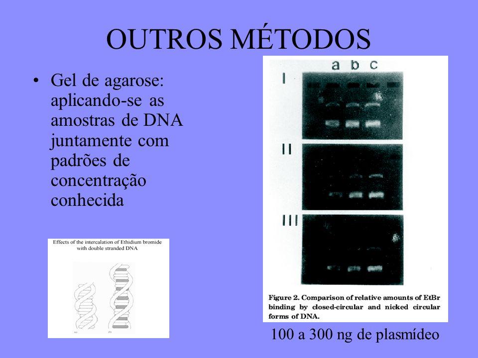 OUTROS MÉTODOS Gel de agarose: aplicando-se as amostras de DNA juntamente com padrões de concentração conhecida 100 a 300 ng de plasmídeo