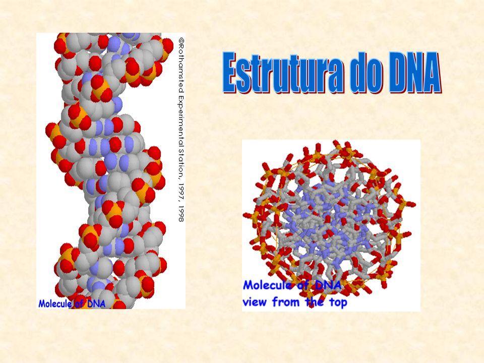 Extração Simples Material + Tampão de Lise: Tris, EDTA, SDS, NaCl e proteinase K.