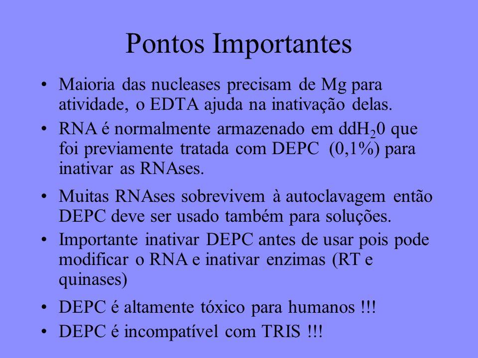 Pontos Importantes Maioria das nucleases precisam de Mg para atividade, o EDTA ajuda na inativação delas.