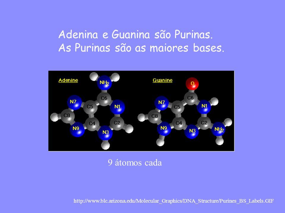 http://www.blc.arizona.edu/Molecular_Graphics/DNA_Structure/Purines_BS_Labels.GIF Timina e Citosina são chamadas Pirimidinas.