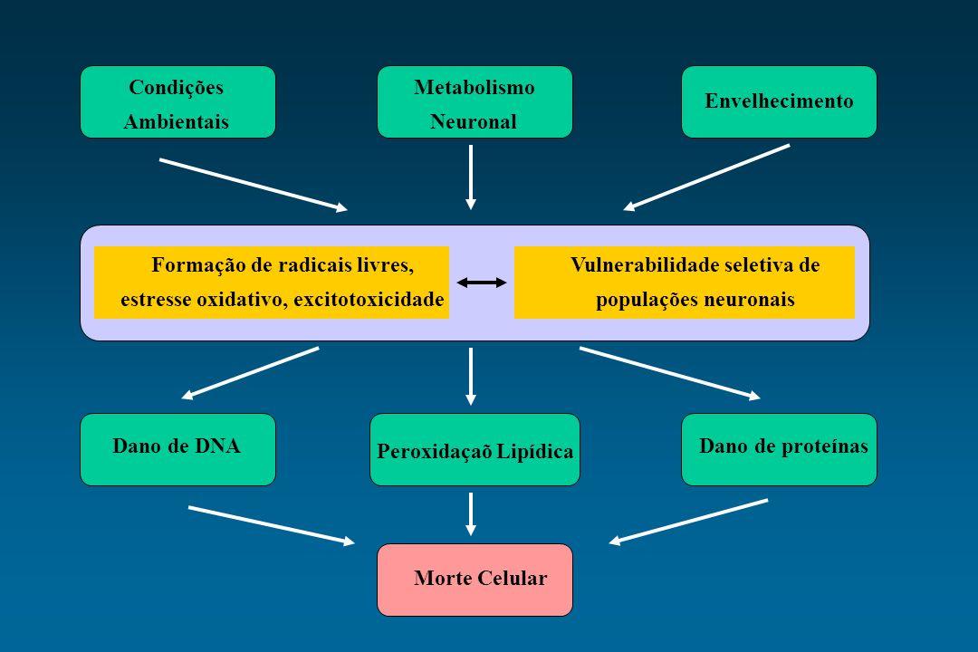 Condições Ambientais Metabolismo Neuronal Envelhecimento Formação de radicais livres, estresse oxidativo, excitotoxicidade Vulnerabilidade seletiva de