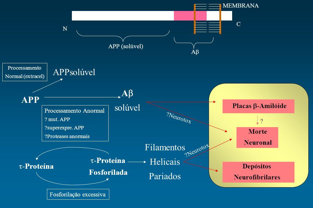 MEMBRANA C N APP (solúvel) A Placas -Amilóide Morte Neuronal Depósitos Neurofibrilares APP -Proteína Fosforilada Filamentos Helicais Pariados APPsolúv