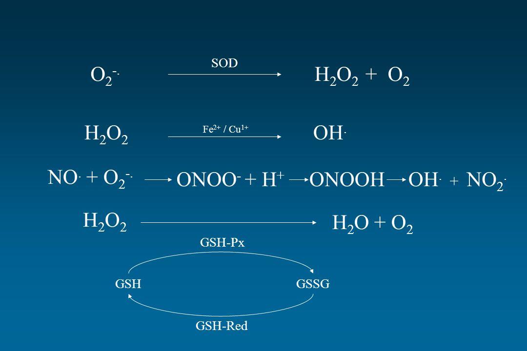 O 2 -. H 2 O 2 + O 2 H2O2H2O2 OH. Fe 2+ / Cu 1+ SOD NO. + O 2 -. ONOO - + H + ONOOHOH. + NO 2. H2O2H2O2 H 2 O + O 2 GSH-Px GSH-Red GSHGSSG
