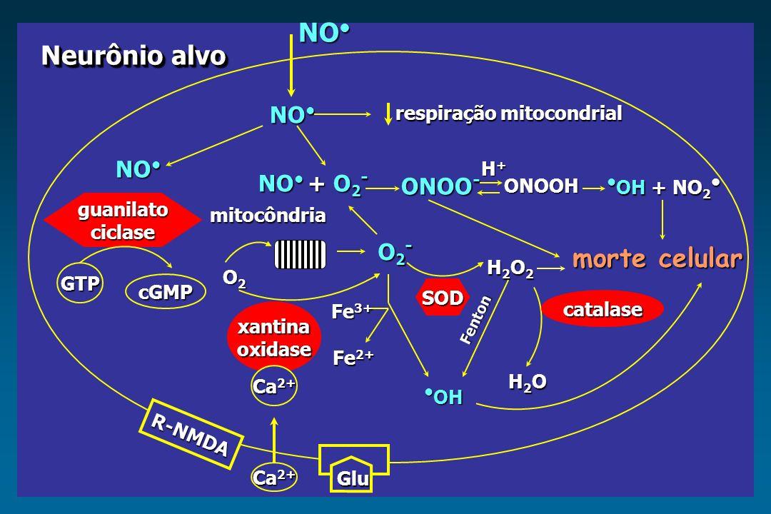 NO NO respiração mitocondrial respiração mitocondrial NO + O 2 - ONOO - H+H+H+H+ ONOOH OH + NO 2 OH + NO 2 morte celular O2-O2-O2-O2- mitocôndria SOD
