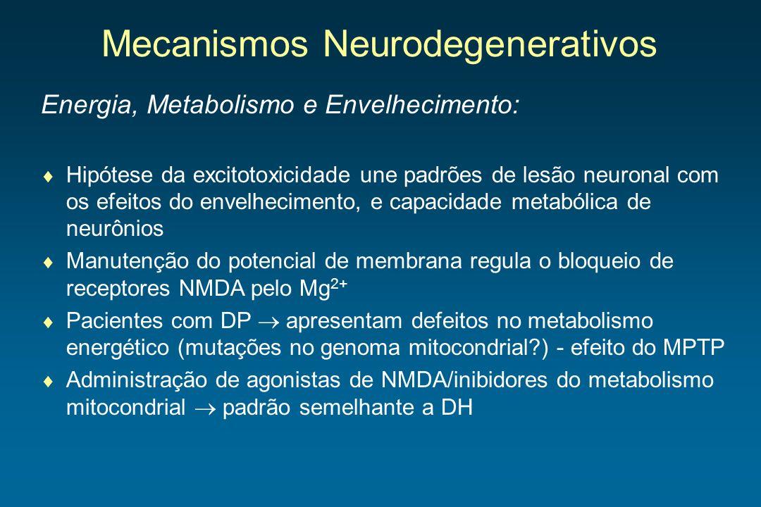 Mecanismos Neurodegenerativos Energia, Metabolismo e Envelhecimento: Hipótese da excitotoxicidade une padrões de lesão neuronal com os efeitos do enve
