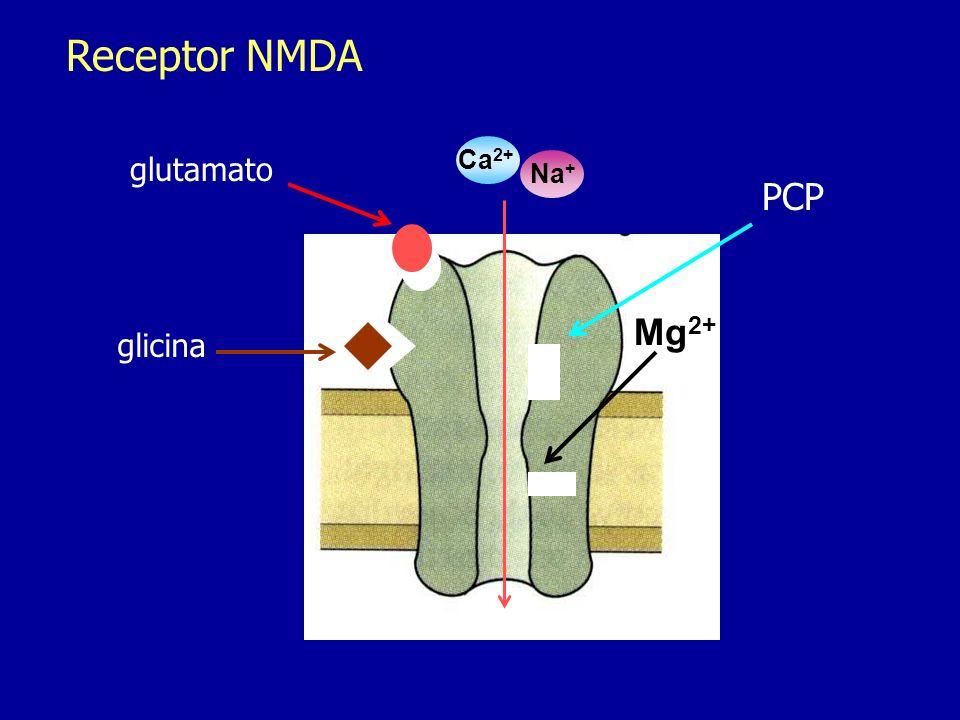 Receptor NMDA glutamato glicina Mg 2+ PCP Ca 2+ Na +