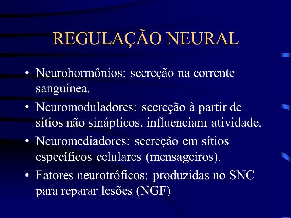 REGULAÇÃO NEURAL Neurohormônios: secreção na corrente sanguínea. Neuromoduladores: secreção à partir de sítios não sinápticos, influenciam atividade.