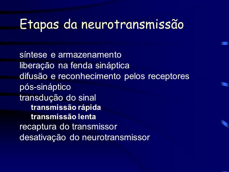 Etapas da neurotransmissão síntese e armazenamento liberação na fenda sináptica difusão e reconhecimento pelos receptores pós-sináptico transdução do