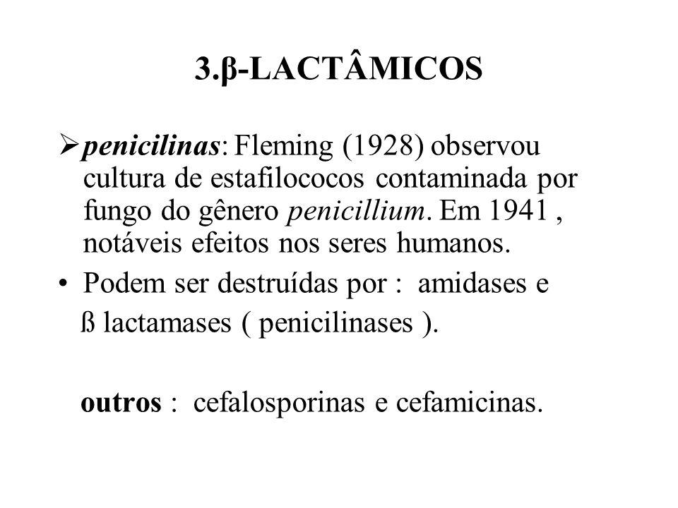 3.β-LACTÂMICOS penicilinas: Fleming (1928) observou cultura de estafilococos contaminada por fungo do gênero penicillium. Em 1941, notáveis efeitos no