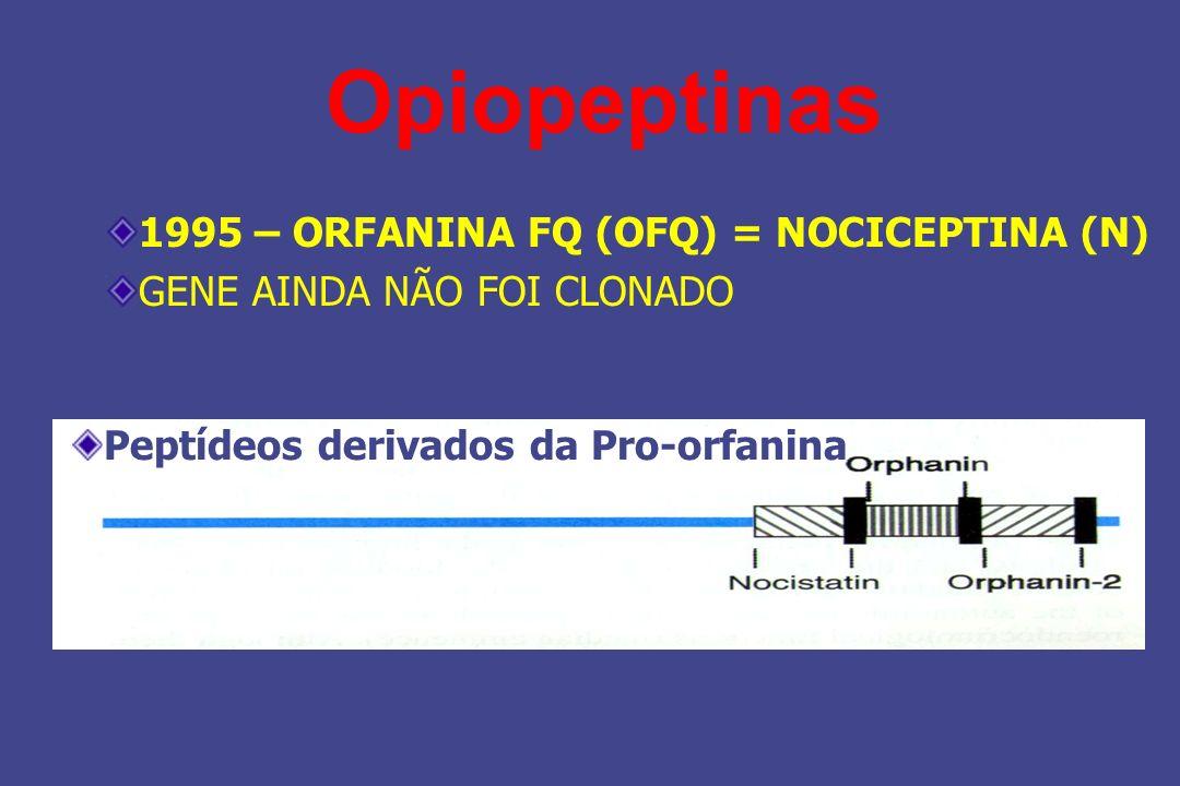 1995 – ORFANINA FQ (OFQ) = NOCICEPTINA (N) GENE AINDA NÃO FOI CLONADO Opiopeptinas Peptídeos derivados da Pro-orfanina