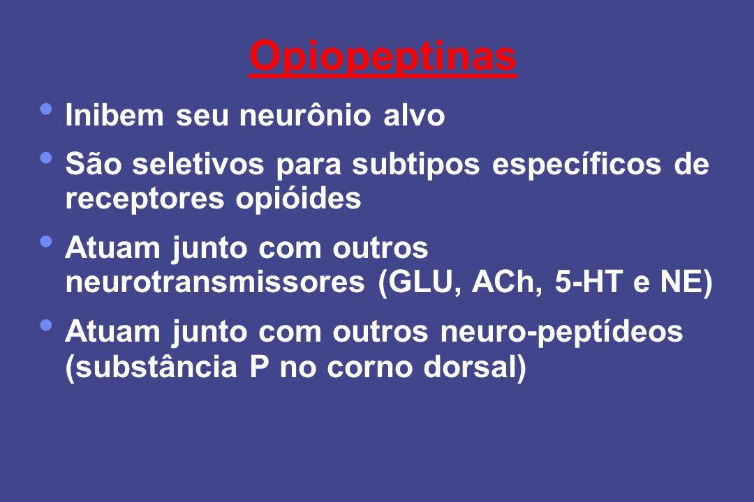 Opiopeptinas Inibem seu neurônio alvo São seletivos para subtipos específicos de receptores opióides Atuam junto com outros neurotransmissores (GLU, A