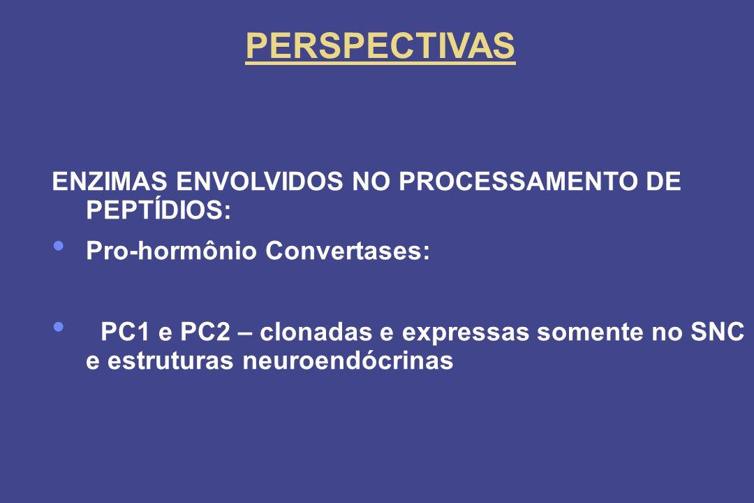 PERSPECTIVAS ENZIMAS ENVOLVIDOS NO PROCESSAMENTO DE PEPTÍDIOS: Pro-hormônio Convertases: PC1 e PC2 – clonadas e expressas somente no SNC e estruturas