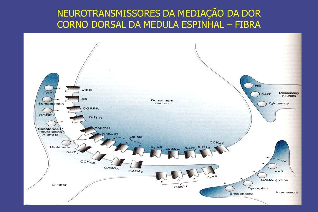 Opiopeptinas Inibem seu neurônio alvo São seletivos para subtipos específicos de receptores opióides Atuam junto com outros neurotransmissores (GLU, ACh, 5-HT e NE) Atuam junto com outros neuro-peptídeos (substância P no corno dorsal)