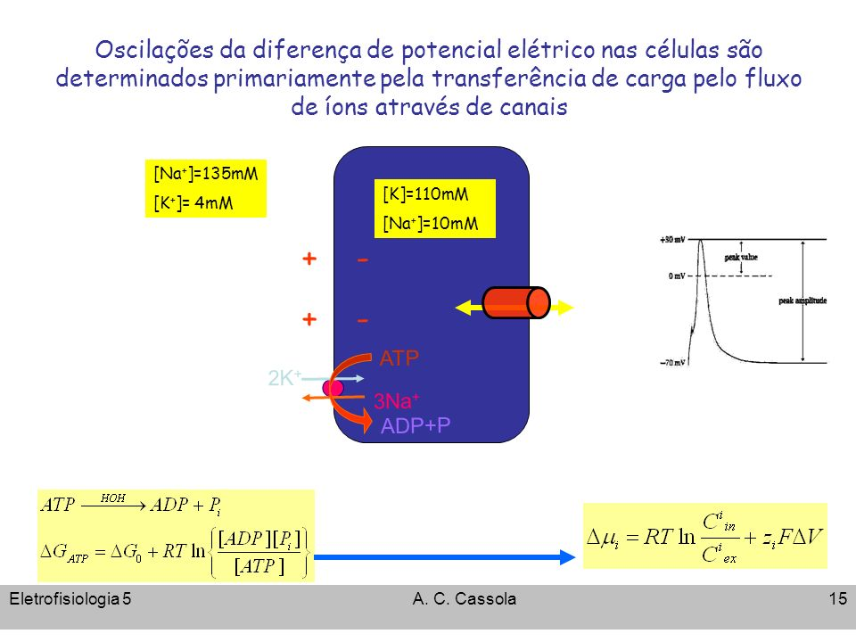 Eletrofisiologia 5A. C. Cassola15 Oscilações da diferença de potencial elétrico nas células são determinados primariamente pela transferência de carga