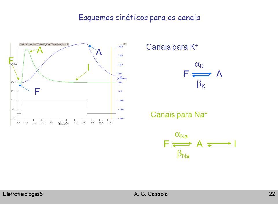 Eletrofisiologia 5A. C. Cassola22 Esquemas cinéticos para os canais Na F AI Canais para Na + K F K A Canais para K + F A F A I