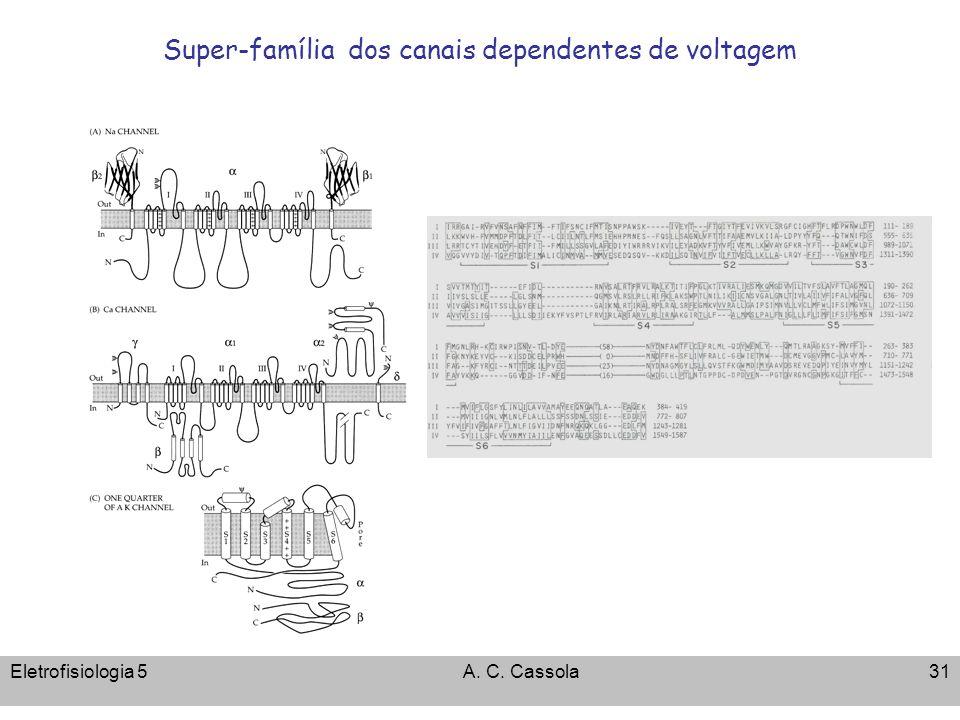Eletrofisiologia 5A. C. Cassola31 Super-família dos canais dependentes de voltagem