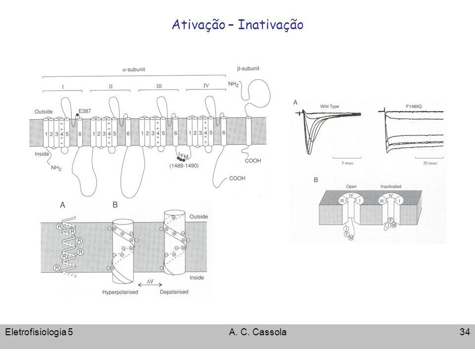 Eletrofisiologia 5A. C. Cassola34 Ativação – Inativação