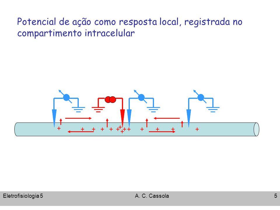 Eletrofisiologia 5A. C. Cassola5 + ++ + +++++++++ + Potencial de ação como resposta local, registrada no compartimento intracelular