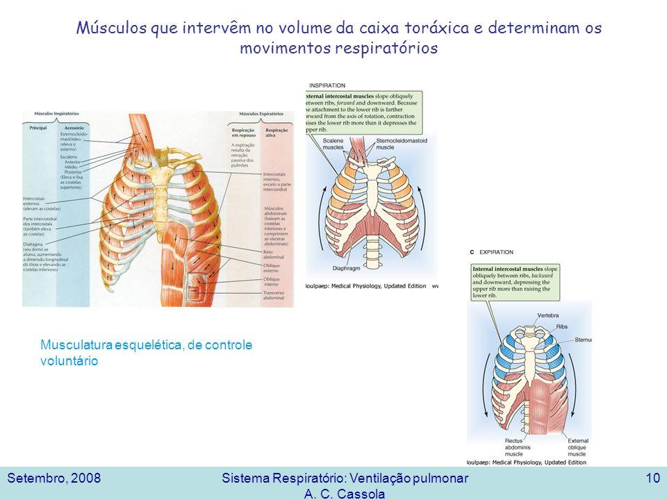 Setembro, 2008Sistema Respiratório: Ventilação pulmonar A. C. Cassola 10 Músculos que intervêm no volume da caixa toráxica e determinam os movimentos