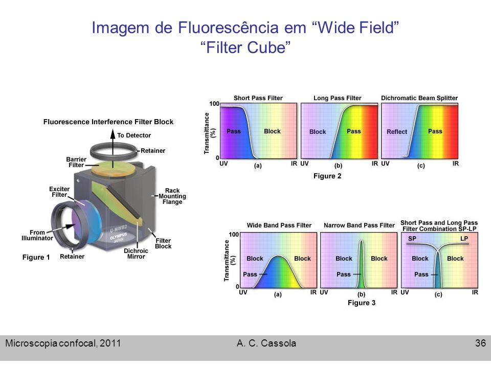 Microscopia confocal, 2011A. C. Cassola36 Imagem de Fluorescência em Wide Field Filter Cube