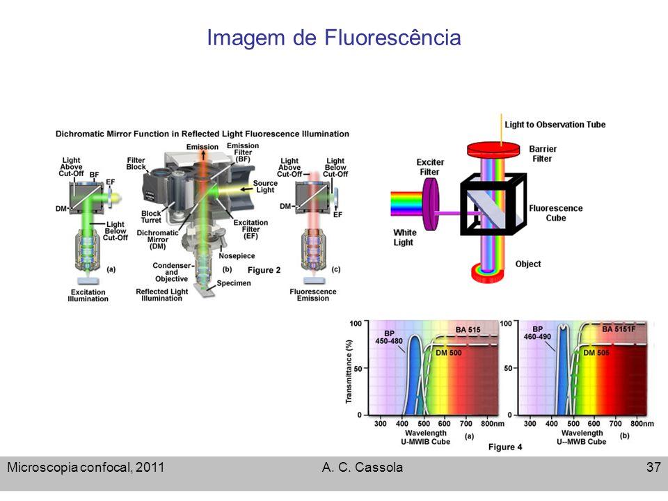 Microscopia confocal, 2011A. C. Cassola37 Imagem de Fluorescência