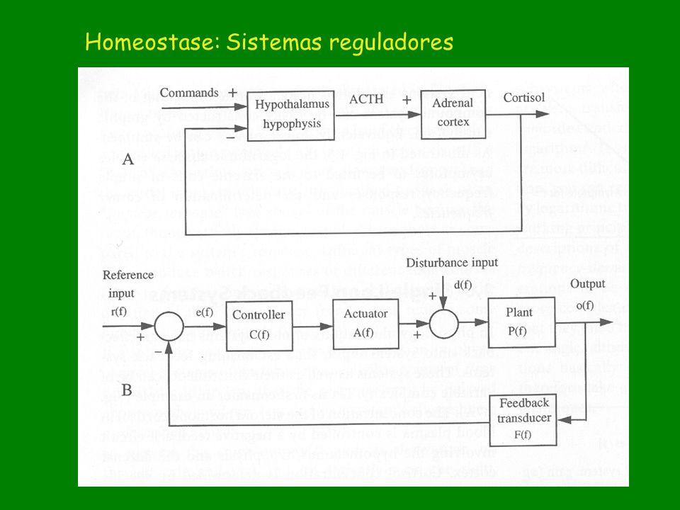 Sistemas reguladores Homeostase: Sistemas reguladores