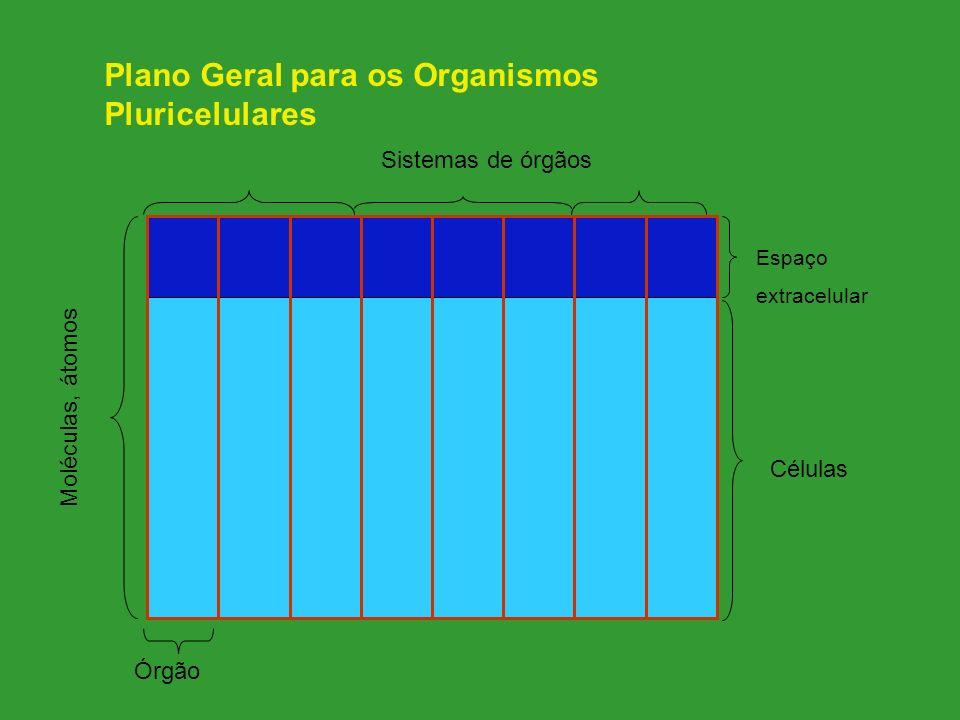 Células Espaço extracelular Moléculas, átomos Órgão Sistemas de órgãos Plano Geral para os Organismos Pluricelulares