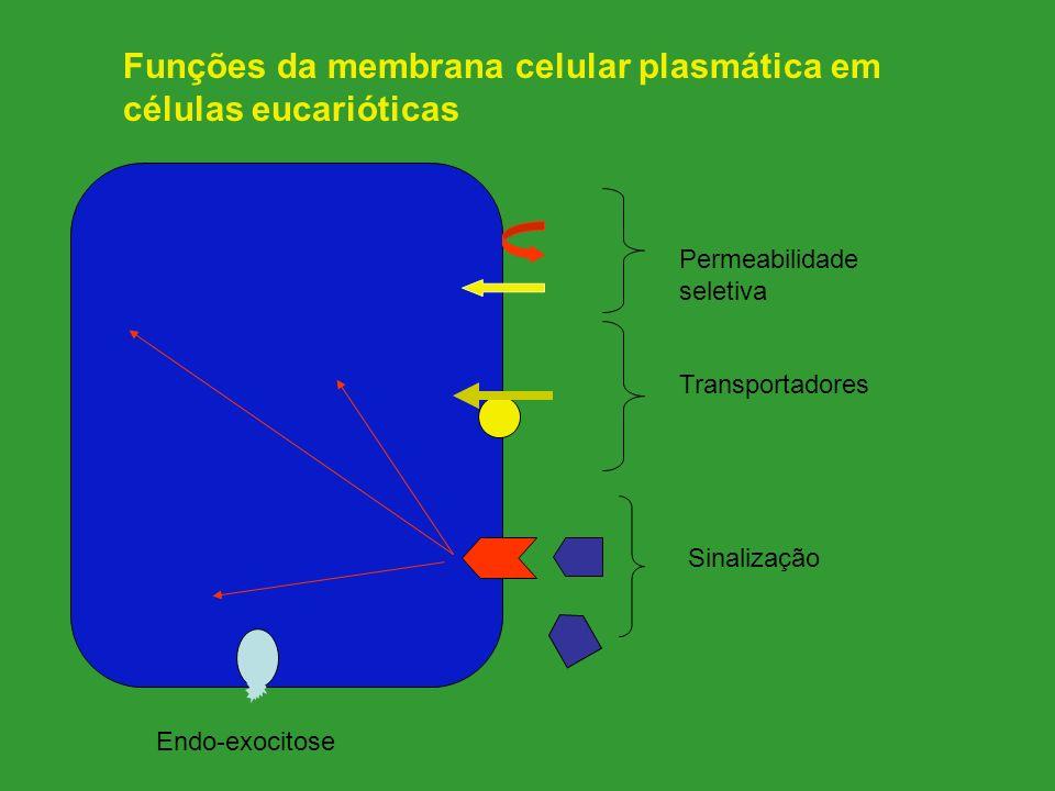 Permeabilidade seletiva Transportadores Sinalização Funções da membrana celular plasmática em células eucarióticas Endo-exocitose
