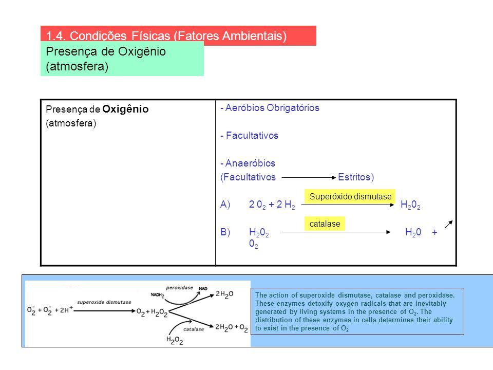 Presença de Oxigênio (atmosfera) - Aeróbios Obrigatórios - Facultativos - Anaeróbios (Facultativos Estritos) A)2 0 2 + 2 H 2 H 2 0 2 B)H 2 0 2 H 2 0 +