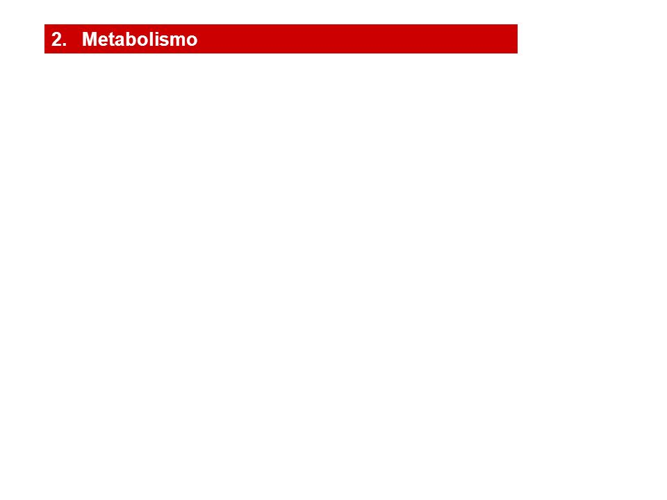 2. Metabolismo