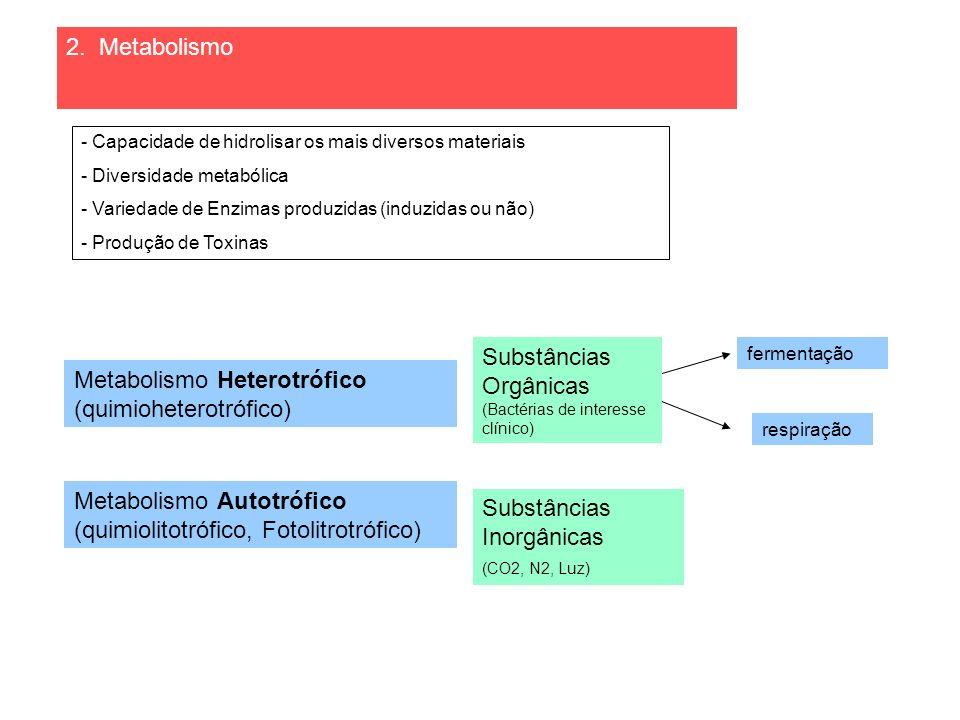 Metabolismo Heterotrófico (quimioheterotrófico) fermentação respiração - Capacidade de hidrolisar os mais diversos materiais - Diversidade metabólica