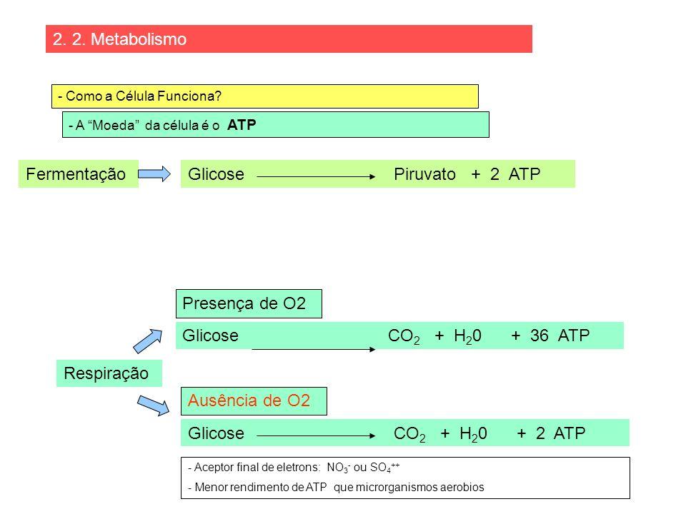 2. 2. Metabolismo - Como a Célula Funciona? - A Moeda da célula é o ATP Fermentação Respiração Glicose Piruvato + 2 ATP Glicose CO 2 + H 2 0 + 2 ATP P