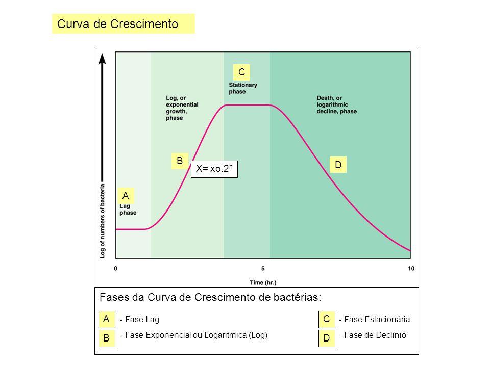 Questões para Estudo: 1.Desenhe uma Curva de crescimento bacteriano e explique cada uma das fases.