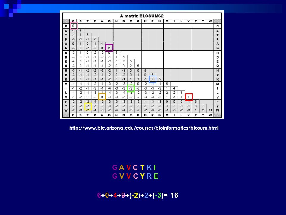 http://www.blc.arizona.edu/courses/bioinformatics/blosum.html G A V C T K I G V V C Y R E 6+0+4+9+(-2)+2+(-3)= 16
