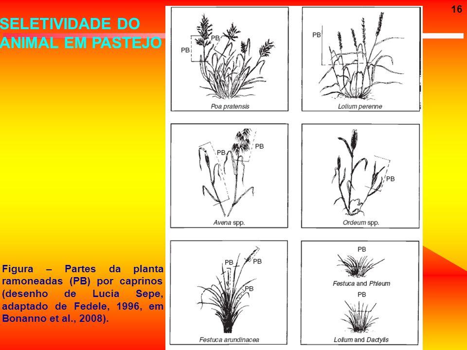 16 SELETIVIDADE DO ANIMAL EM PASTEJO Figura – Partes da planta ramoneadas (PB) por caprinos (desenho de Lucia Sepe, adaptado de Fedele, 1996, em Bonan
