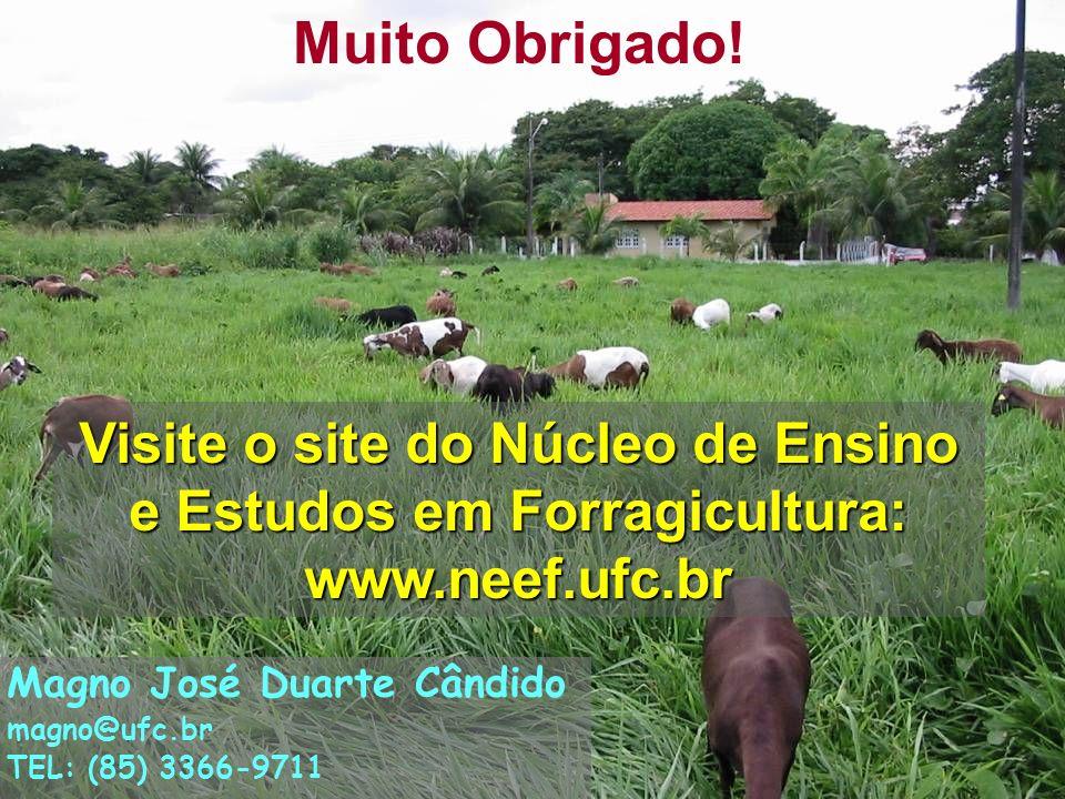 19 Muito Obrigado! Visite o site do Núcleo de Ensino e Estudos em Forragicultura: www.neef.ufc.br Magno José Duarte Cândido magno@ufc.br TEL: (85) 336