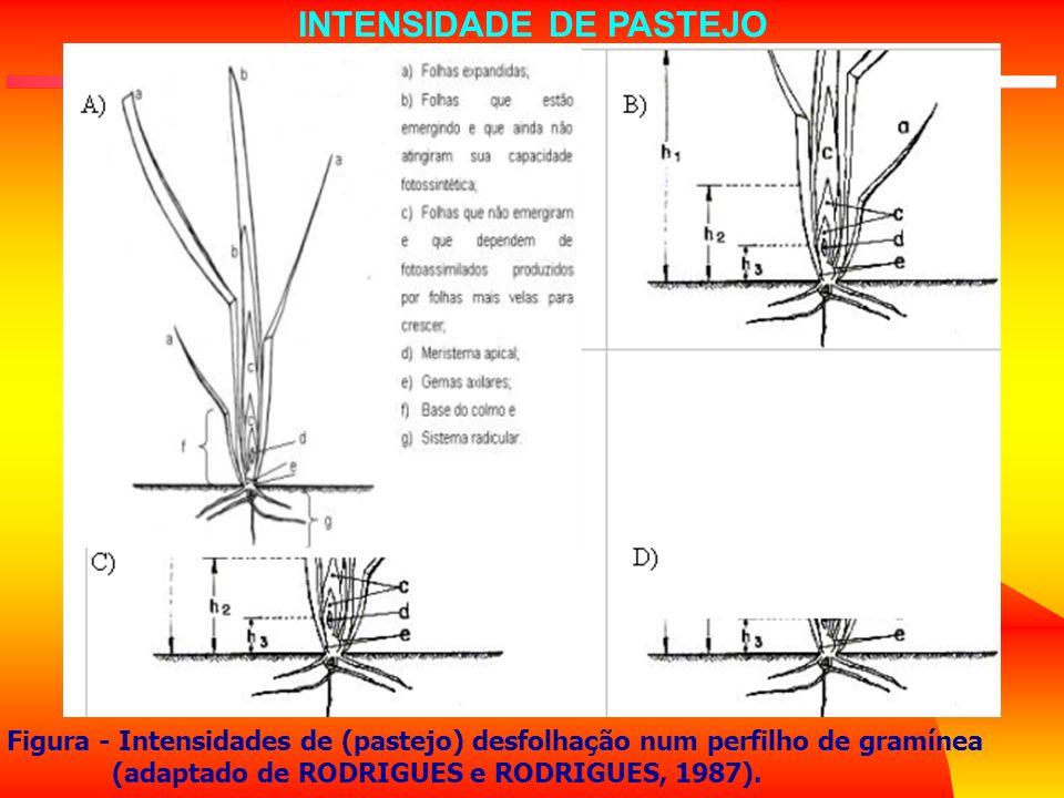 Figura - Intensidades de (pastejo) desfolhação num perfilho de gramínea (adaptado de RODRIGUES e RODRIGUES, 1987). INTENSIDADE DE PASTEJO