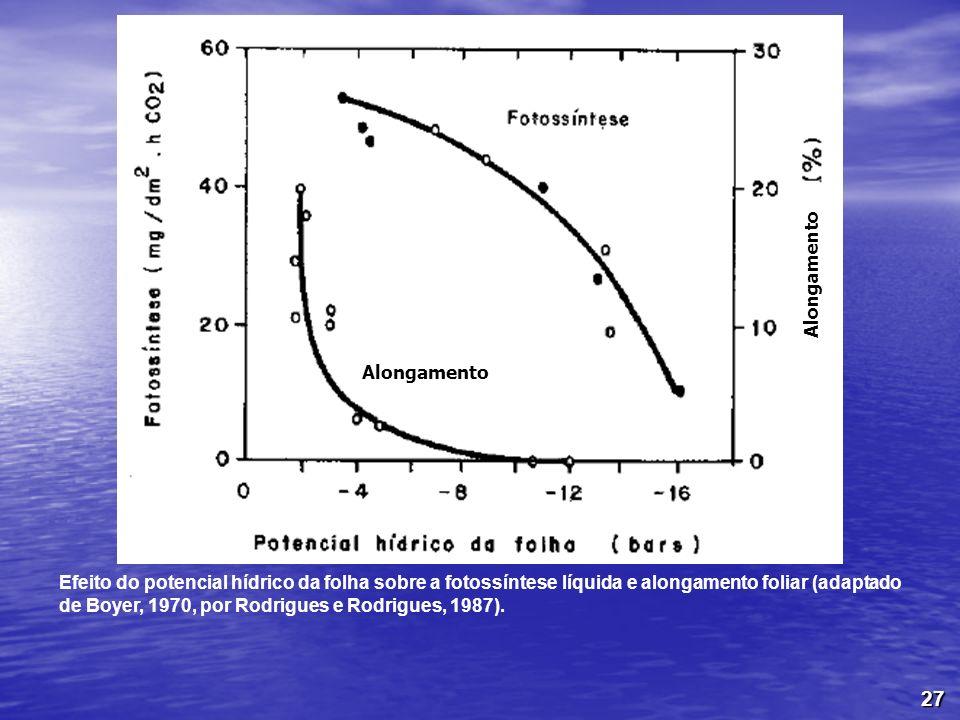 27 Efeito do potencial hídrico da folha sobre a fotossíntese líquida e alongamento foliar (adaptado de Boyer, 1970, por Rodrigues e Rodrigues, 1987).