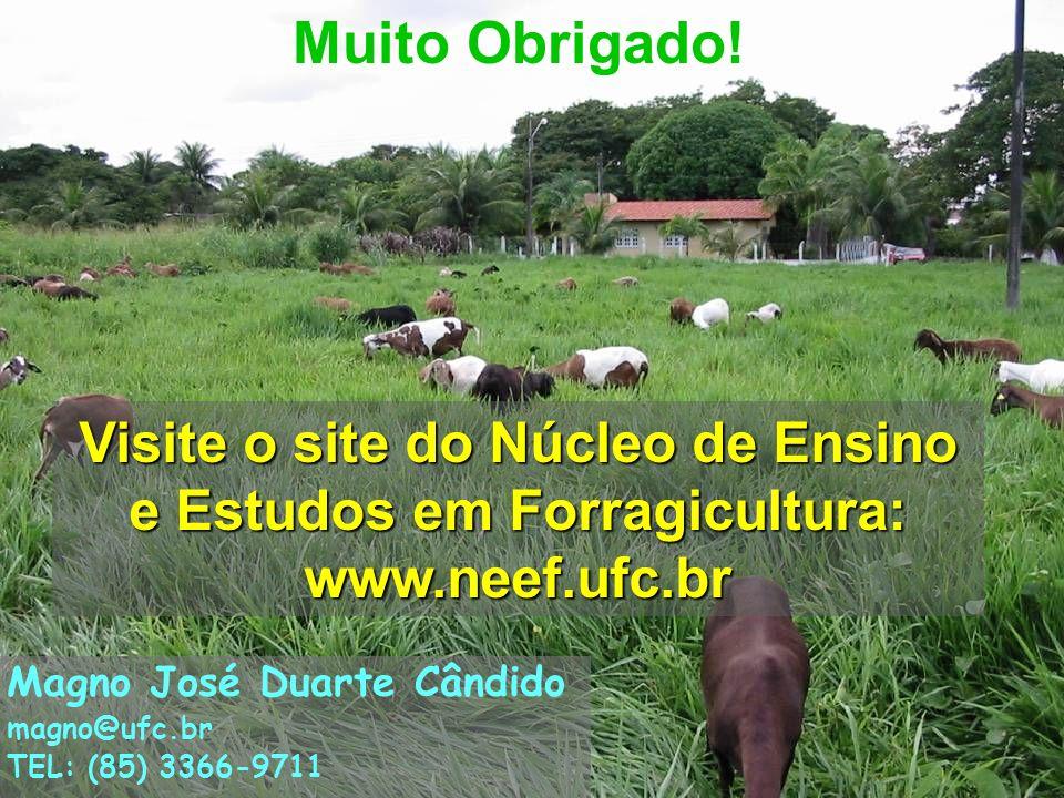 28 Muito Obrigado! Visite o site do Núcleo de Ensino e Estudos em Forragicultura: www.neef.ufc.br Magno José Duarte Cândido magno@ufc.br TEL: (85) 336
