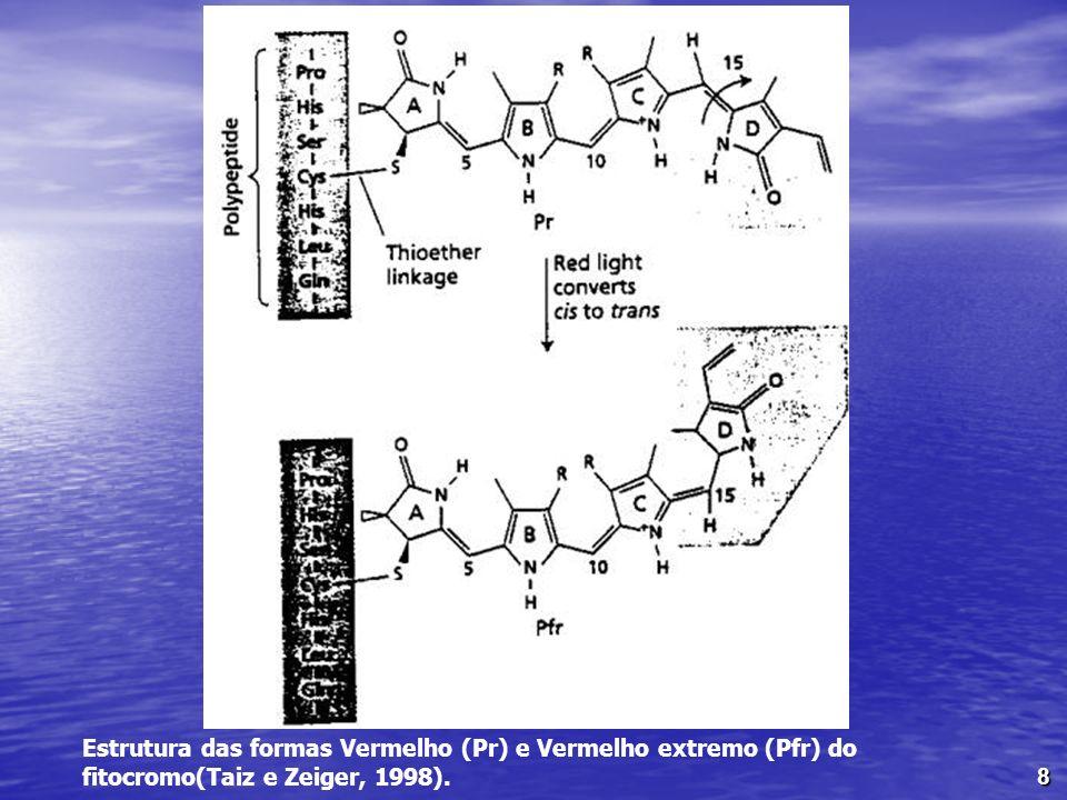 8 Estrutura das formas Vermelho (Pr) e Vermelho extremo (Pfr) do fitocromo(Taiz e Zeiger, 1998).