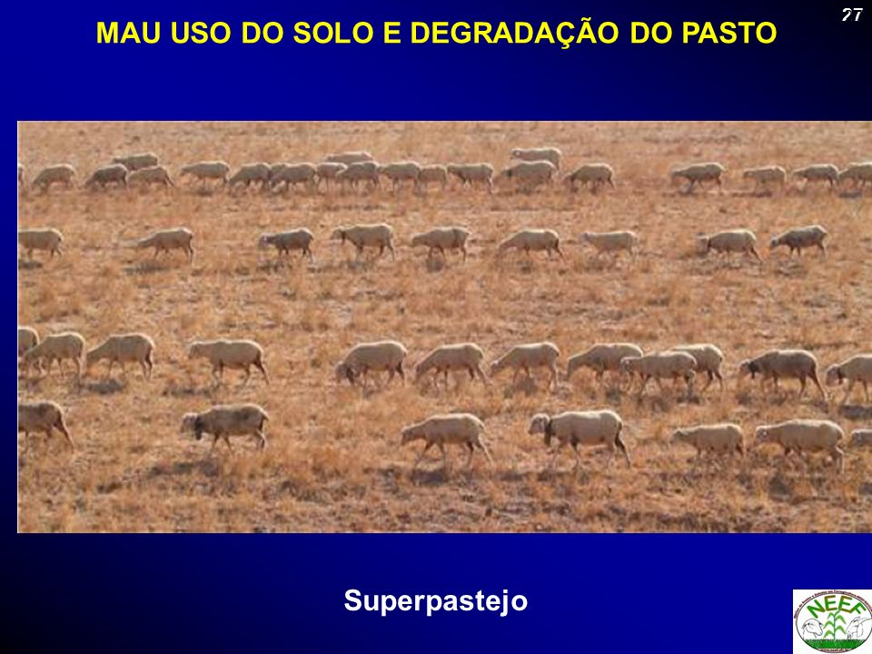 27 Superpastejo MAU USO DO SOLO E DEGRADAÇÃO DO PASTO