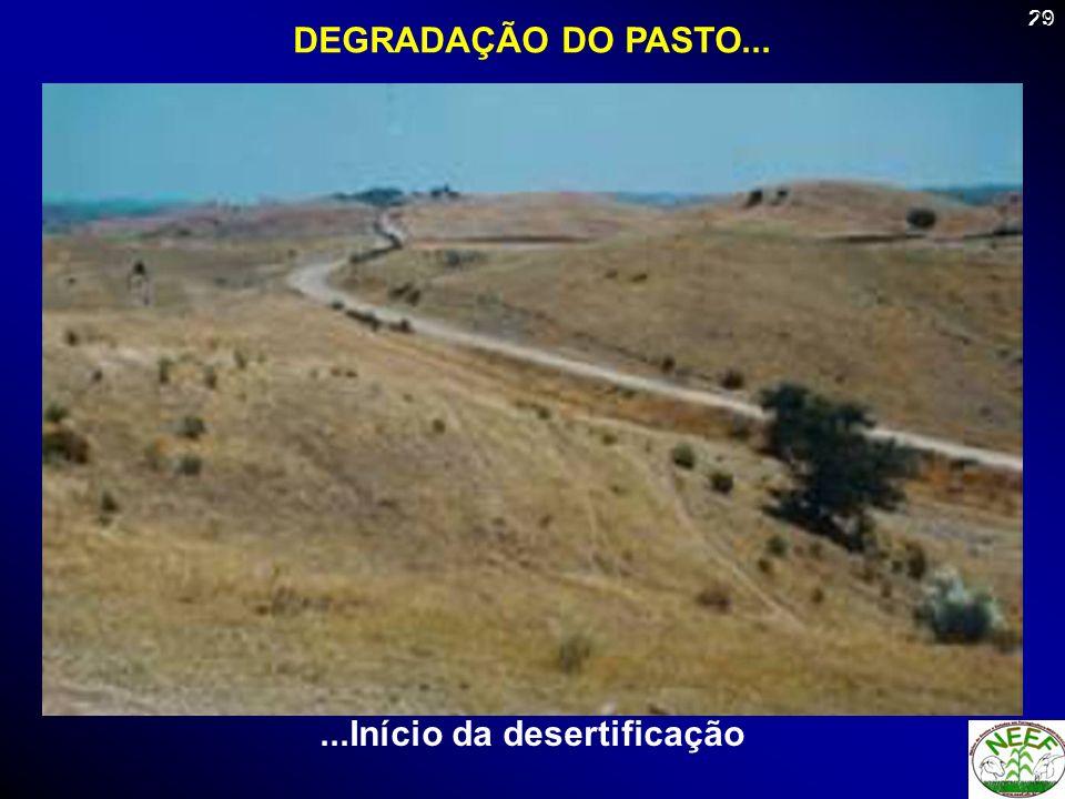 29 DEGRADAÇÃO DO PASTO......Início da desertificação