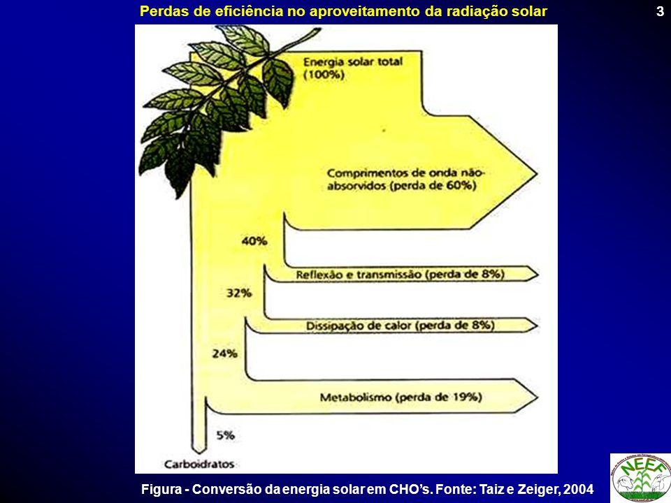 3 Perdas de eficiência no aproveitamento da radiação solar Figura - Conversão da energia solar em CHOs. Fonte: Taiz e Zeiger, 2004