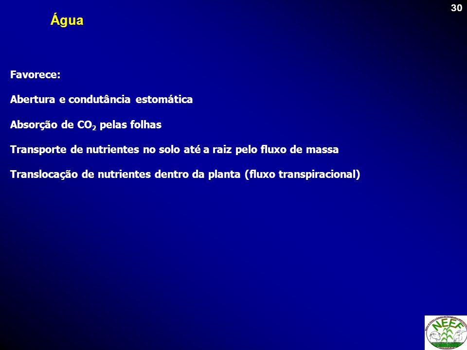 30 Favorece: Abertura e condutância estomática Absorção de CO 2 pelas folhas Transporte de nutrientes no solo até a raiz pelo fluxo de massa Transloca