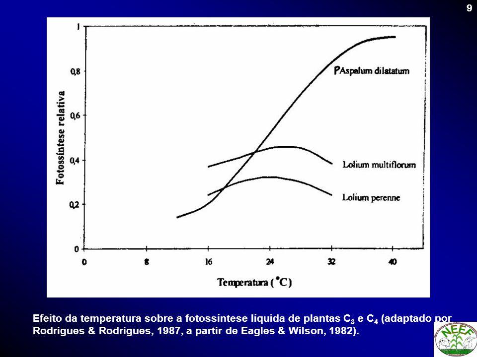 10 EspécieTemperatura foliar (ºC)Referência MínimÓtimmáxim Gramínea Brachiaria ruziziensis093856 LUDLOW e WILSON (1971) Capim-búffel (Cenchrus cilliares)063961 LUDLOW e WILSON (1971) Capim-gordura (Melinis minutiflora)063958 LUDLOW e WILSON (1971) P.