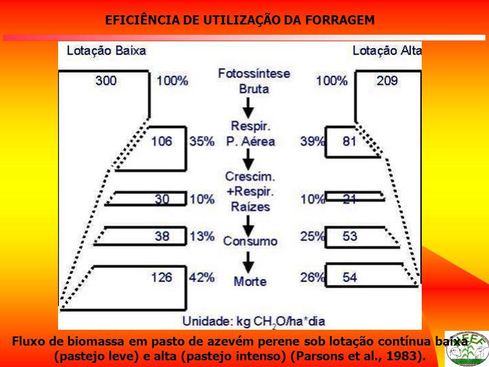 Fluxo de biomassa em pasto de azevém perene sob lotação contínua baixa (pastejo leve) e alta (pastejo intenso) (Parsons et al., 1983). EFICIÊNCIA DE U