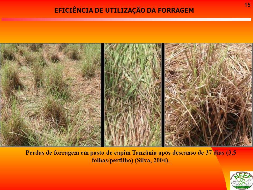15 Perdas de forragem em pasto de capim Tanzânia após descanso de 37 dias (3,5 folhas/perfilho) (Silva, 2004). EFICIÊNCIA DE UTILIZAÇÃO DA FORRAGEM