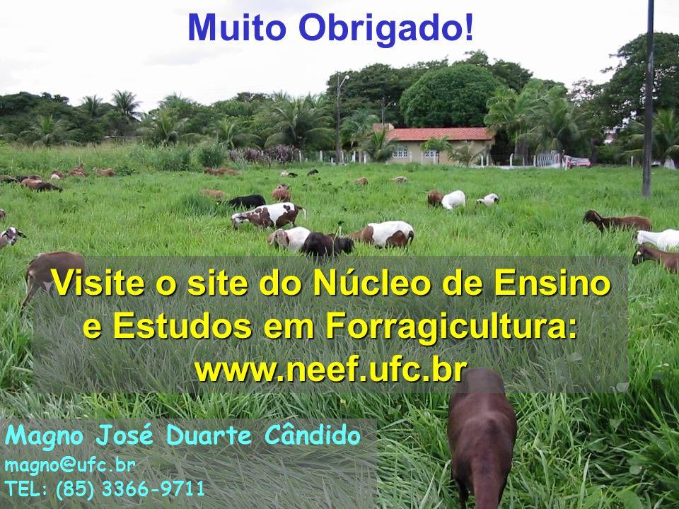17 Muito Obrigado! Visite o site do Núcleo de Ensino e Estudos em Forragicultura: www.neef.ufc.br Magno José Duarte Cândido magno@ufc.br TEL: (85) 336